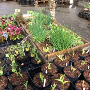 Introduktionskursus: Permakultur for alle @ Naturplanteskolen | Hedehusene | Danmark