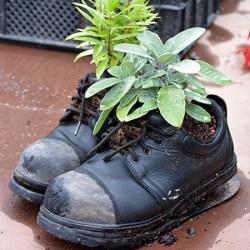 Giv en kursusplads til Naturplanteskolen i gave.