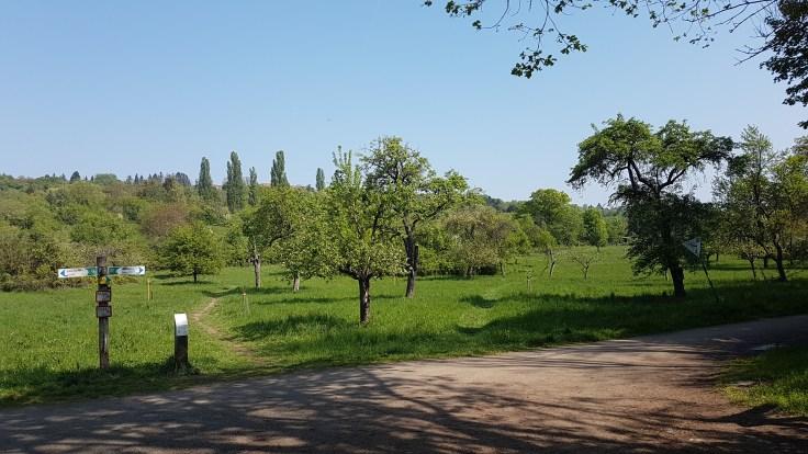 In den Obstbäumen am Enkheimer Ried brütet unter anderem der Steinkauz.