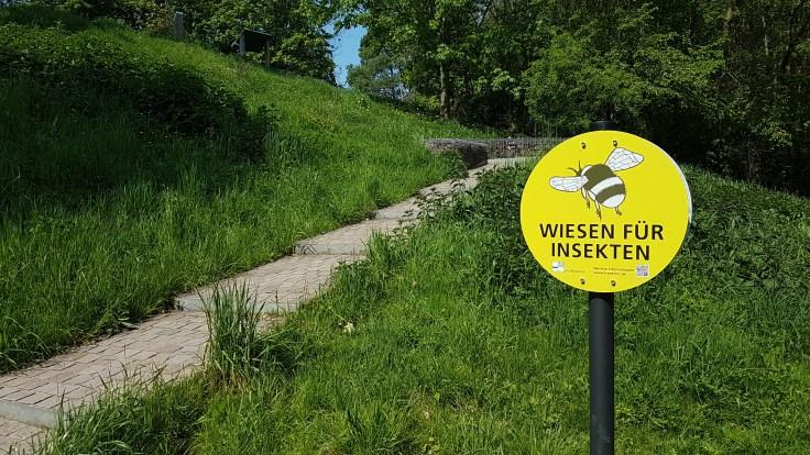 Wiese für Insekten an Naturschutzgebiet Enkheimer Ried in Frankfurt