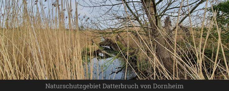 Naturschutzgebiet Datterbruch von Dornheim