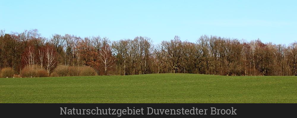 Naturschutzgebiet Duvenstedter Brook