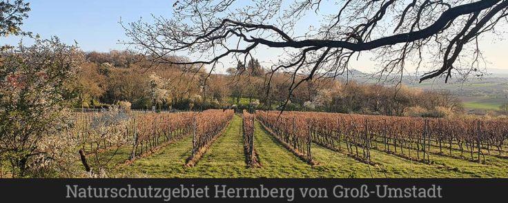 Naturschutzgebiet Herrnberg von Groß-Umstadt
