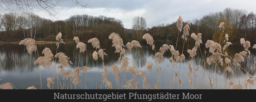 Naturschutzgebiet Pfungstädter Moor (1)