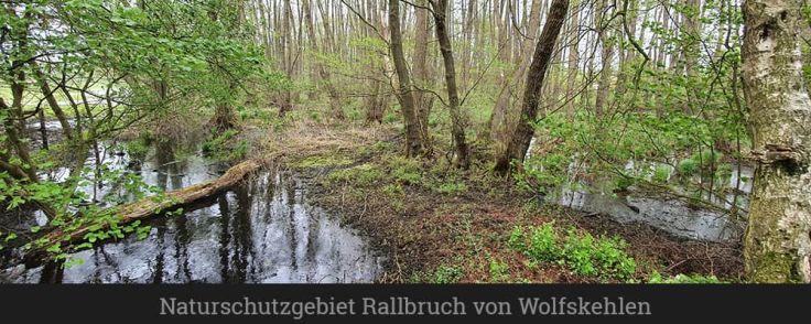 Naturschutzgebiet Rallbruch von Wolfskehlen
