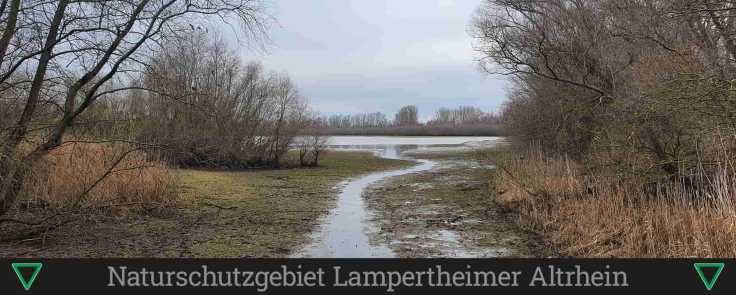 Naturschutzgebiet Lampertheimer Althrein (1)