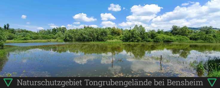 Naturschutzgebiet Tongrubengelände bei Bensheim