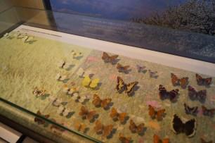 Schmetterlinge Barnim Panorama