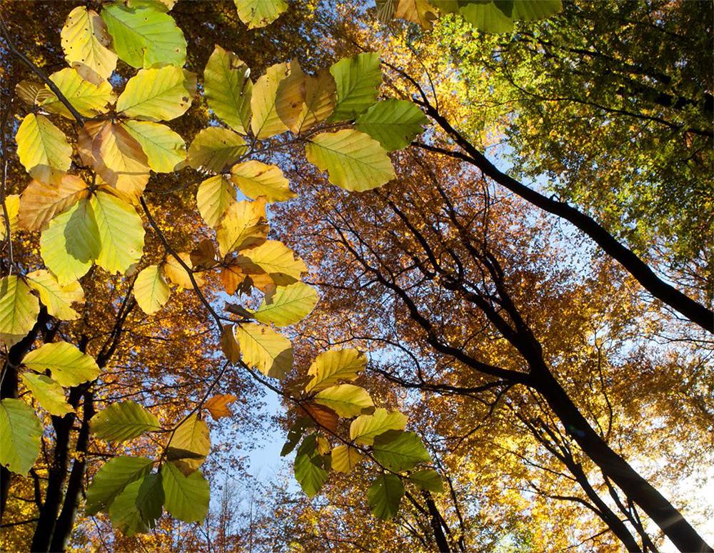 Tag der Buchenwälder