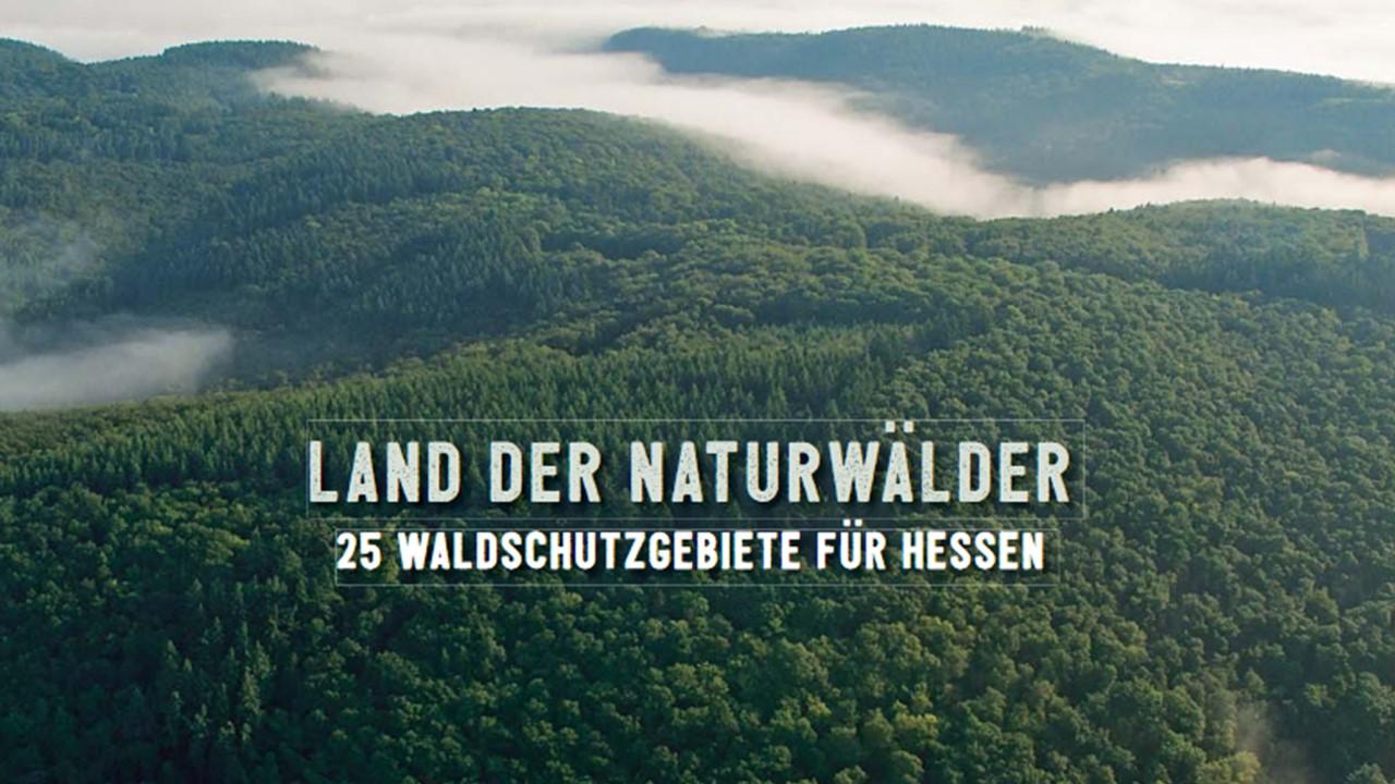 Naturwälder auch in Hessen gefordert