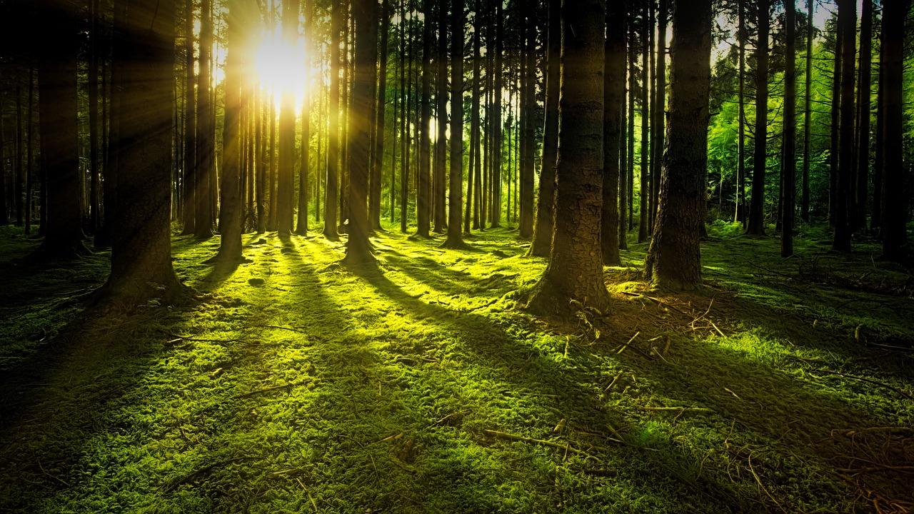 Deutschlands Wäldern geht es schlecht