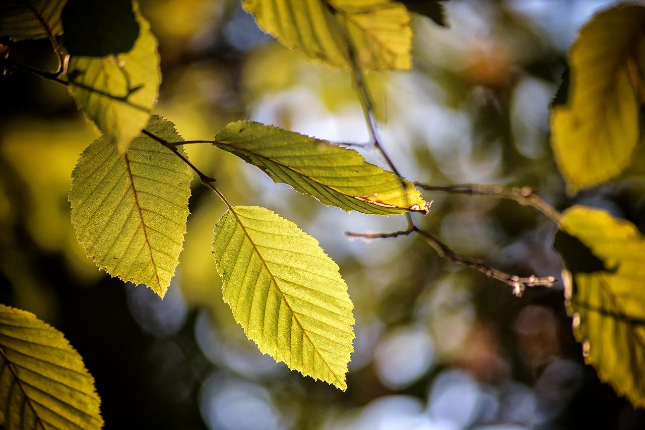 Kreistag Main-Spessart beschliesst Waldschutz