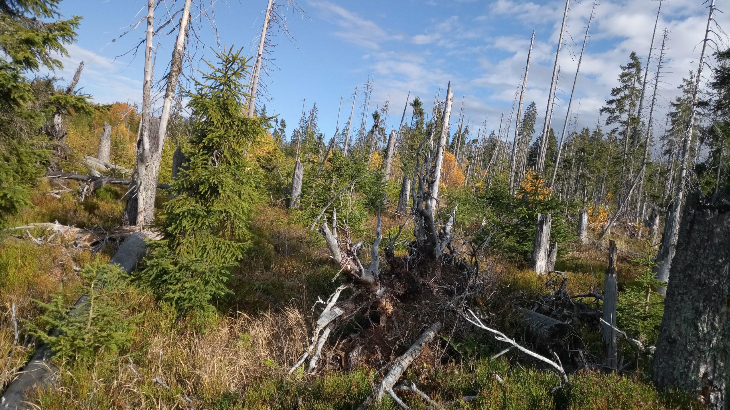 Naturzone im Nationalpark Bayerischer Wald erreicht 72,3 %