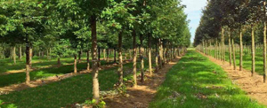 natuurbegraafplaats-ijsselhof-Gouda-300