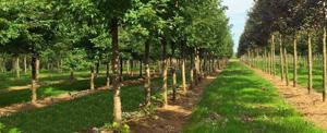 Parkbegraafplaats Gouda