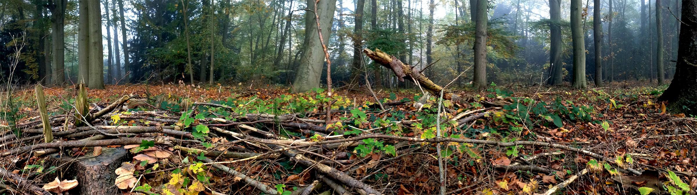 Natuurbegraven op een natuurbegraafplaats 2400px