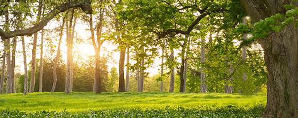 breng de natuur naar de begraafplaats