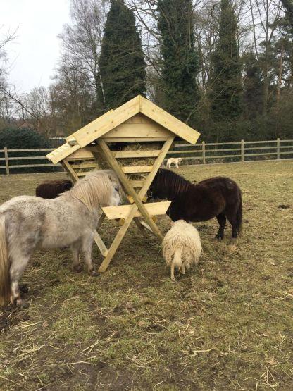 Hooiruif voor ponys en kleine paarden met schaap