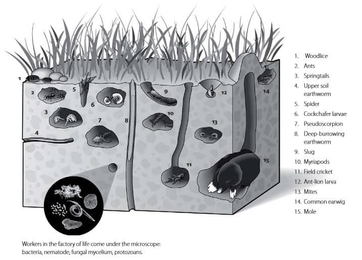 Tip 3: Stimuleer uw bodemleven: het vormt de basis van uw moestuin