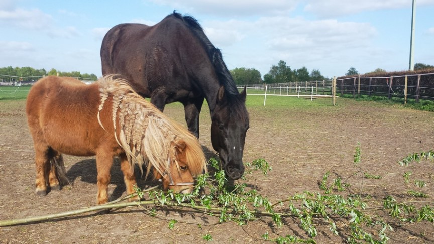 natuurlijk paarden voeren