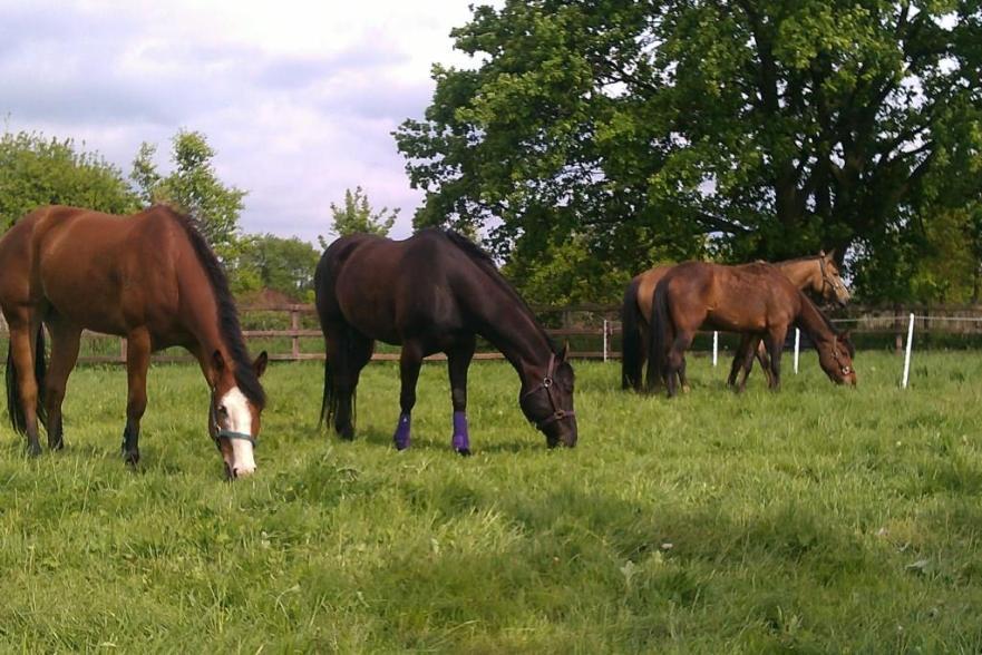 insulineresistentie bij paarden