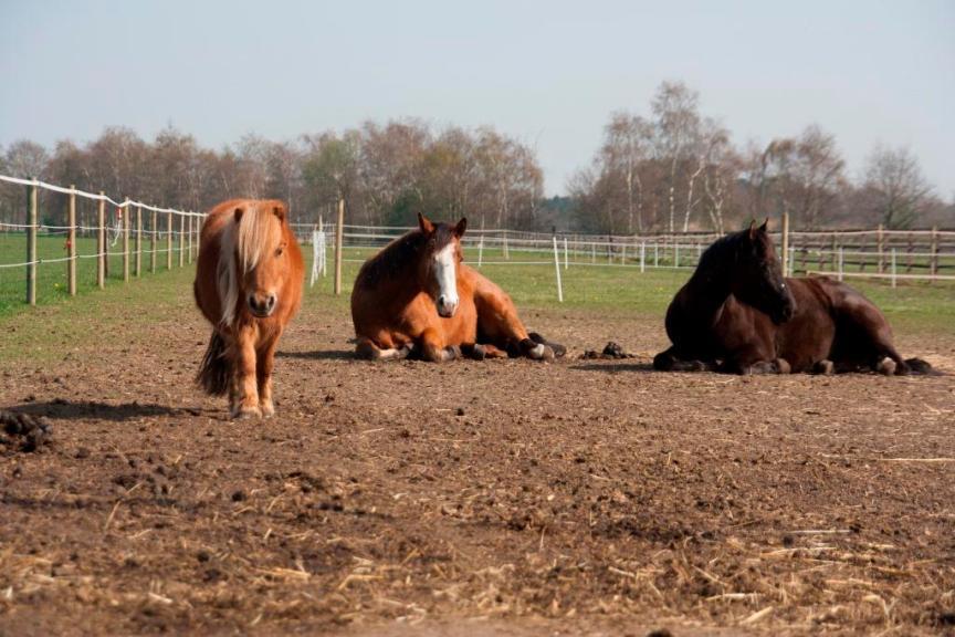 natuurlijk paarden houden