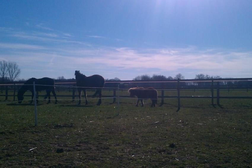 paarden wei zon in paddock paradise