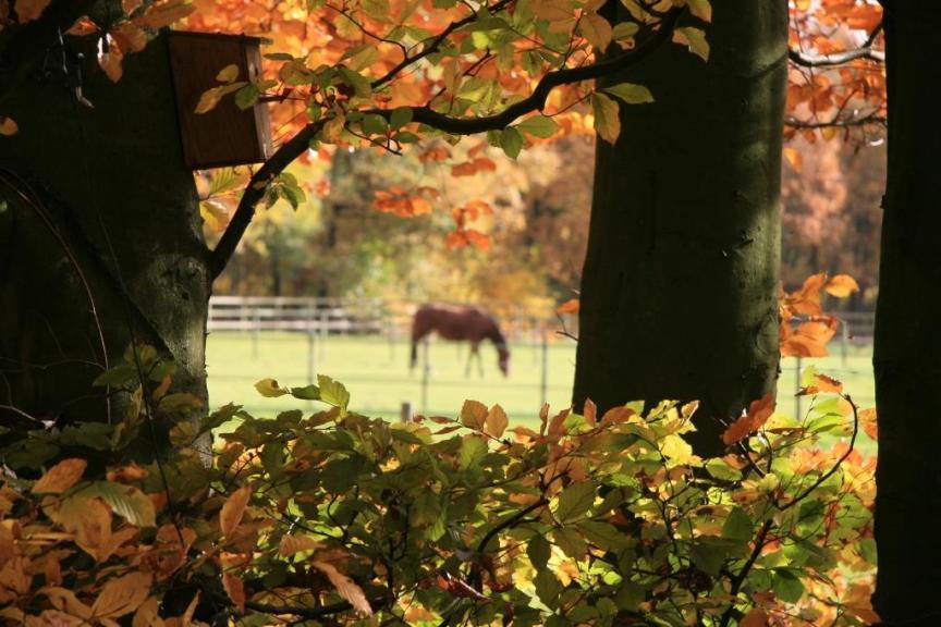 paard gezond en blij in de herfst