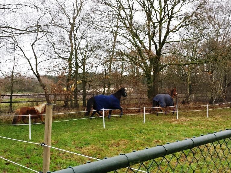 ervaringen met paarden verhuizen
