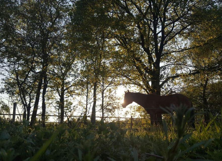 duurzaamheid paarden