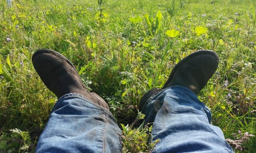 earth day tips voor groener paardenleven
