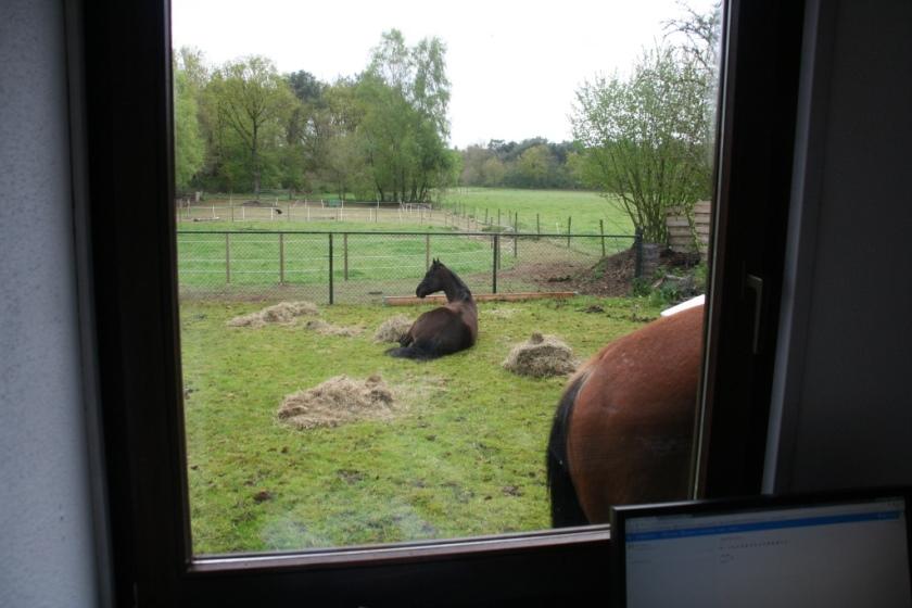 bestrating aanleggen paarden