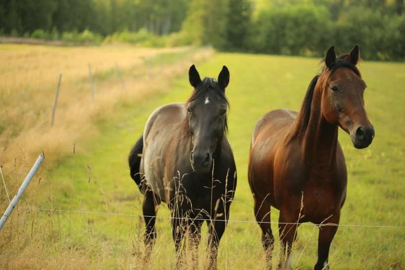 osteopathie en lyme paard