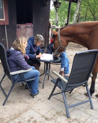alona workshop acupressuur
