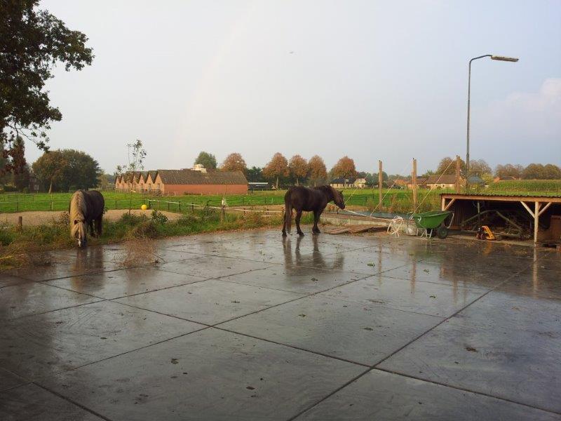 paardenparadijs