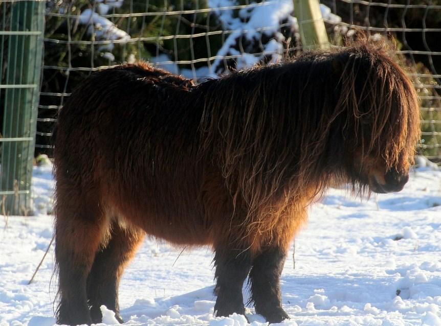 wintervacht paard
