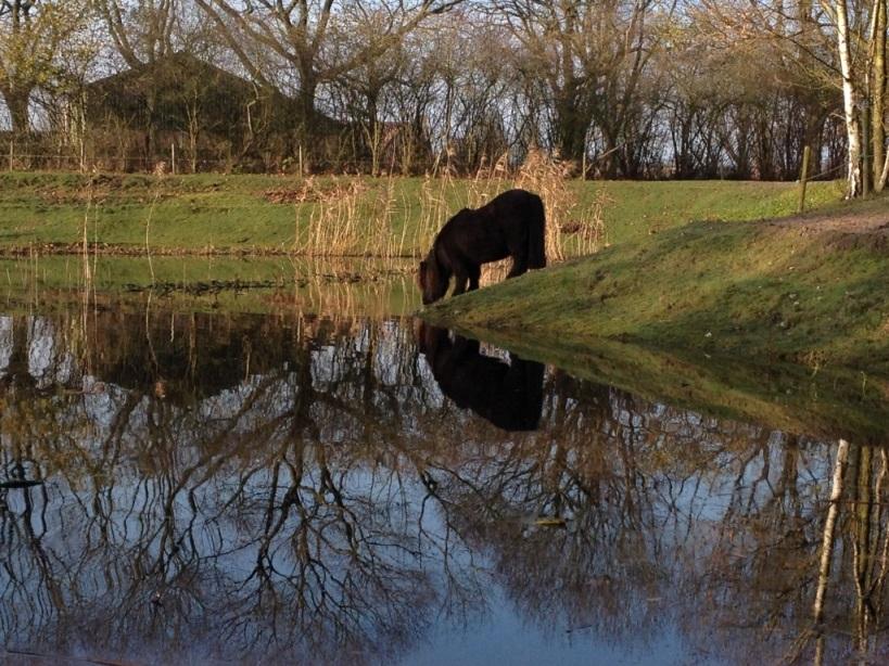 natuurlijke watervoorziening paard