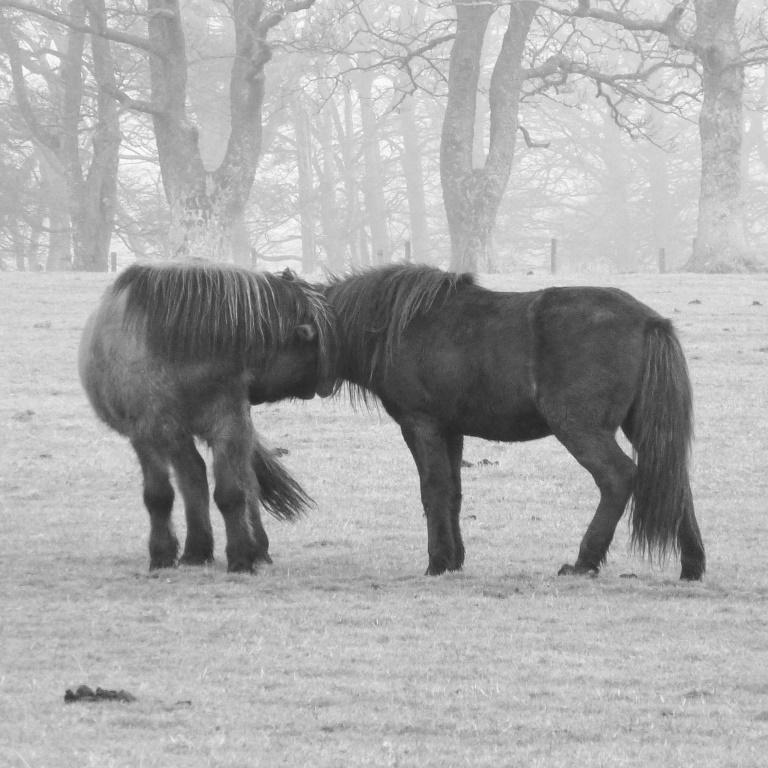 paardenwelzijn schotland