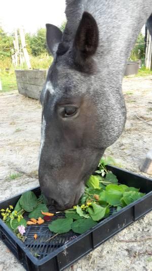 herfst salade paard