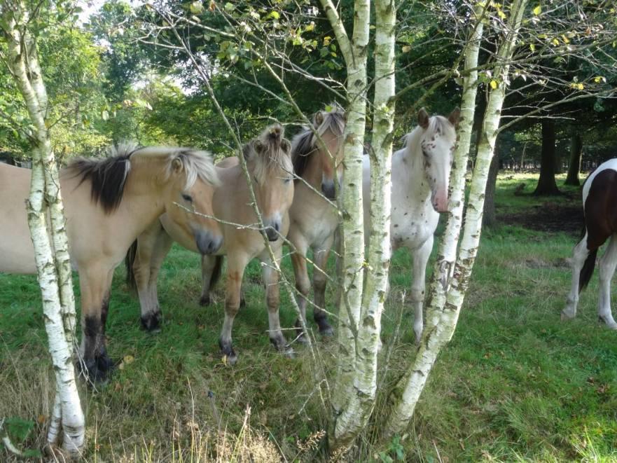 paarden planten kruiden herfst