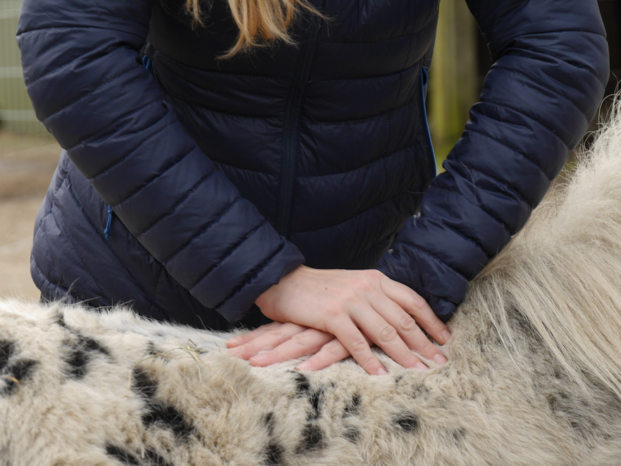 Paardenfysiotherapie Stable Fysio rugbehandeling