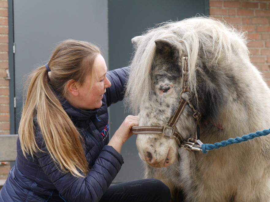 Check van de hals van het paard door Stable Fysio