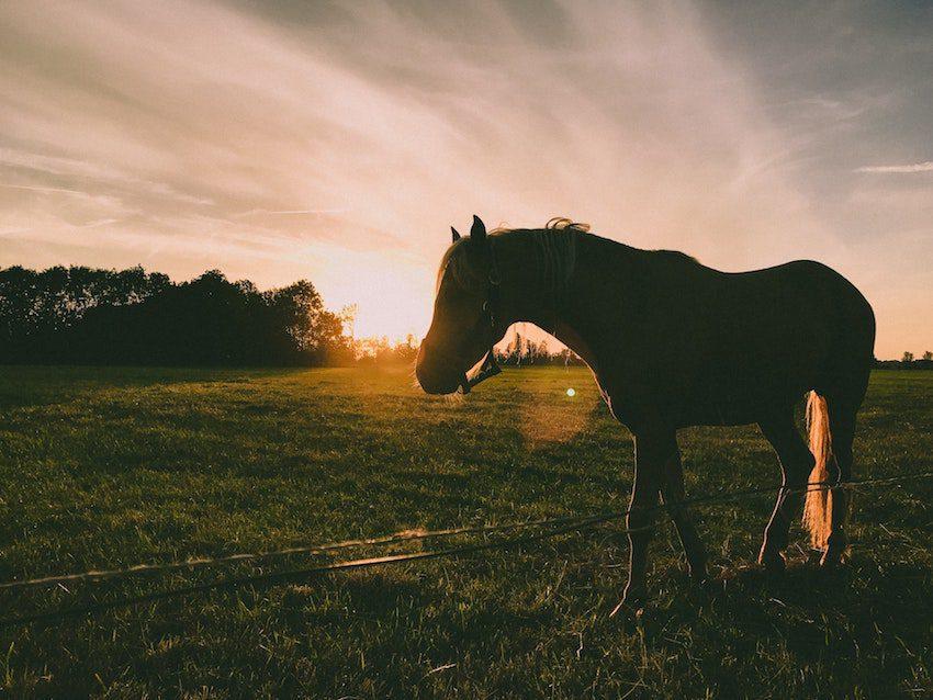 Keuzes maken hoeveel paarden