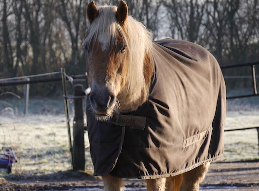oud paard met deken in de winter