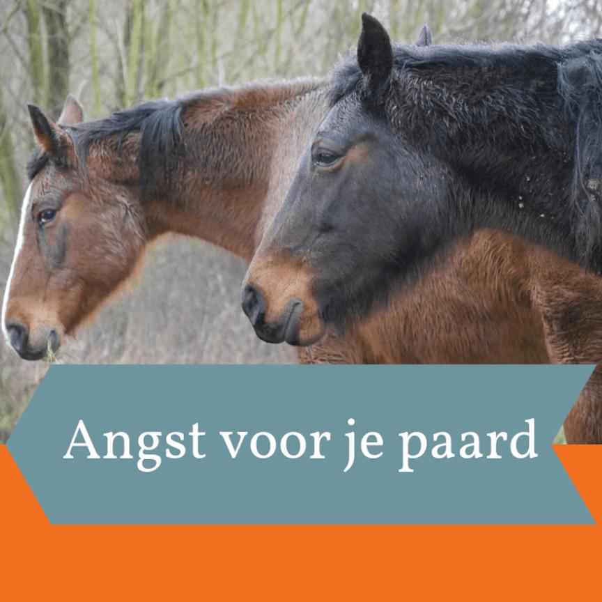 angst voor je paard