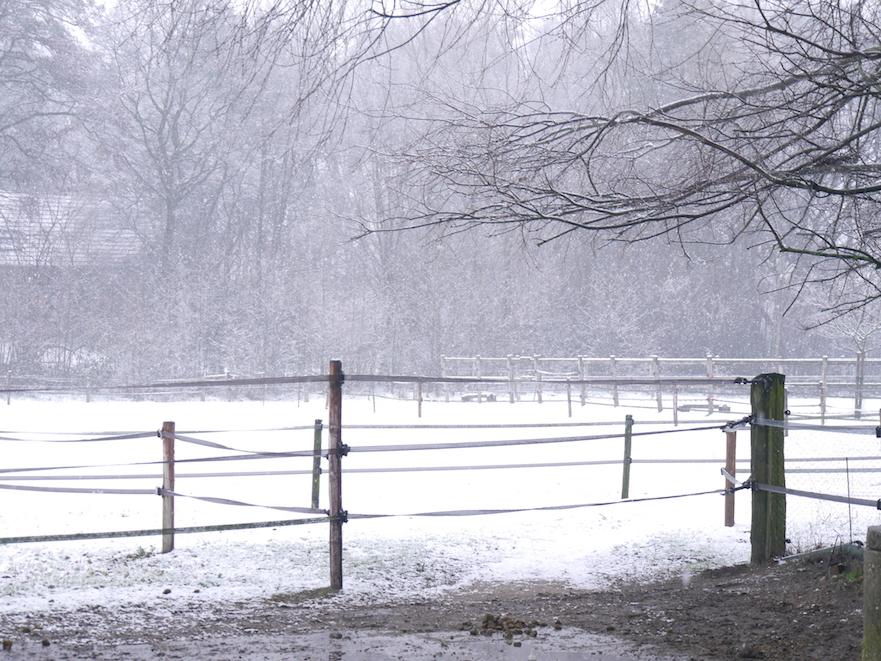 paddock paradise in de sneeuw bij stephanie
