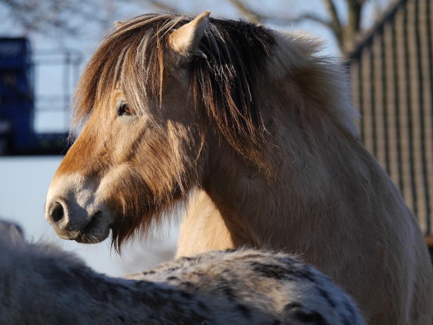 angst voor je paard: controleverlies