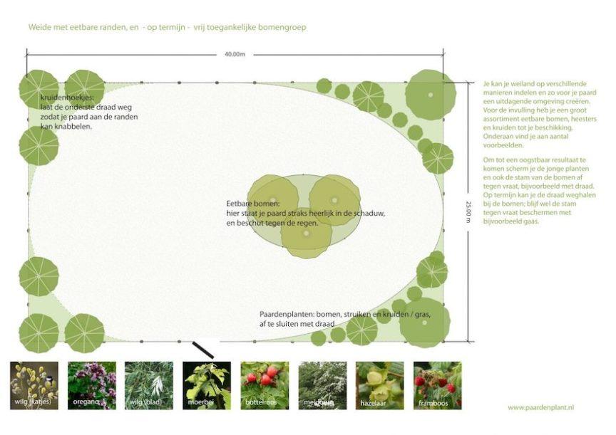 eetbare planten voor paarden: voorbeeldontwerp Paard & Plant - paardenplant
