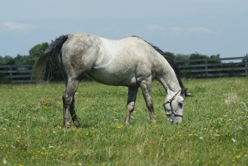 een goede bodem is belangrijk voor paardenweide