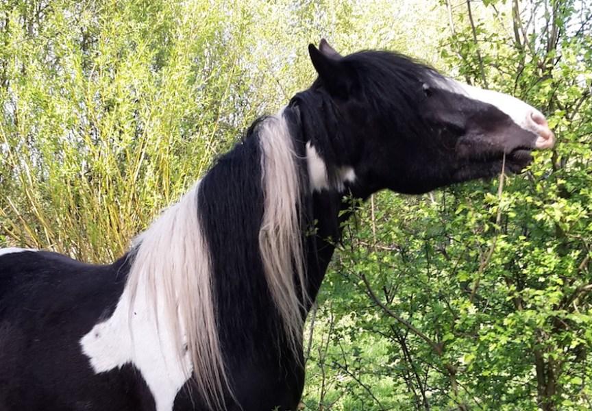 eetbare haag voor paarden